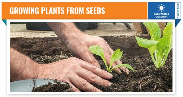 DIY-Growing-Plants